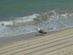 oiseaux, jeu, observation, mer, mouettes, porquerolles, la capter