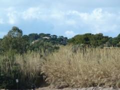 Presqu'île de Giens, la tour fondue, carnet de campagne, protection du territoire, Nature, oiseaux, îles d'or, hiver, soleil, écriture