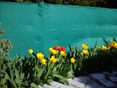 journal de ma colline, écriture, printemps, dimanche, jardin