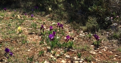 poème , printemps, haïku