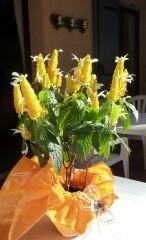 plantes exotiques, fleurs, fleuriste