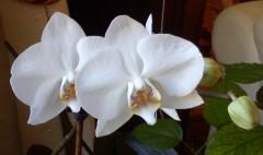 orchidées, beauté, méditation, yoga