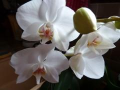 écriture,photos,fleurs,orchidées,nature
