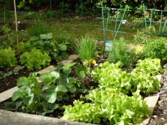 Mathis, famille, joie, avril, jardin