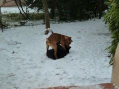 chronique de la vie ordinaire, chiens, animaux domestiques, neige, jeux