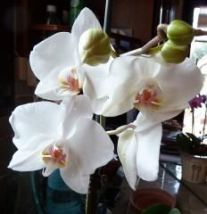 orchidées, photos, écriture, fleurs