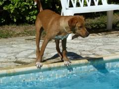 journal, écriture, piscine, chiens
