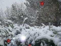photos, neige, chiens, oiseaux