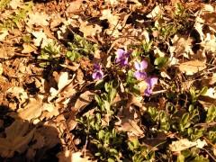 Nature, écriture, fleurs sauvages, respect de la nature