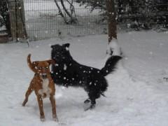 neige, photos, chiens, oiseaux