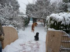 neige, photos, chiens