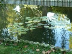 Sèvres, Mathis, héron, jardin de ville