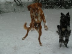 neige, photos, oiseaux, chiens