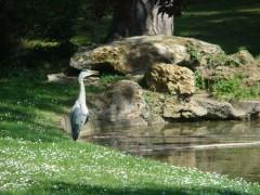 Sèvres; Mathis, héron, jardin de ville