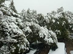 photos,nature,neige,hiver,provence,saint maximin la sainte baume